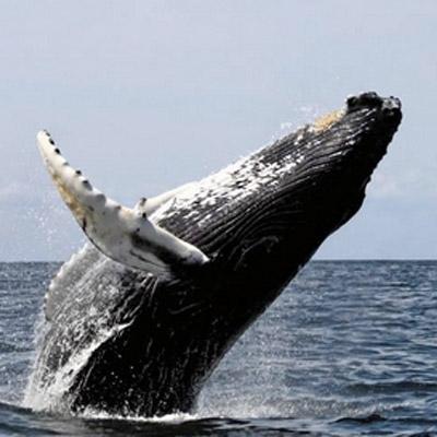 sind delphine wale